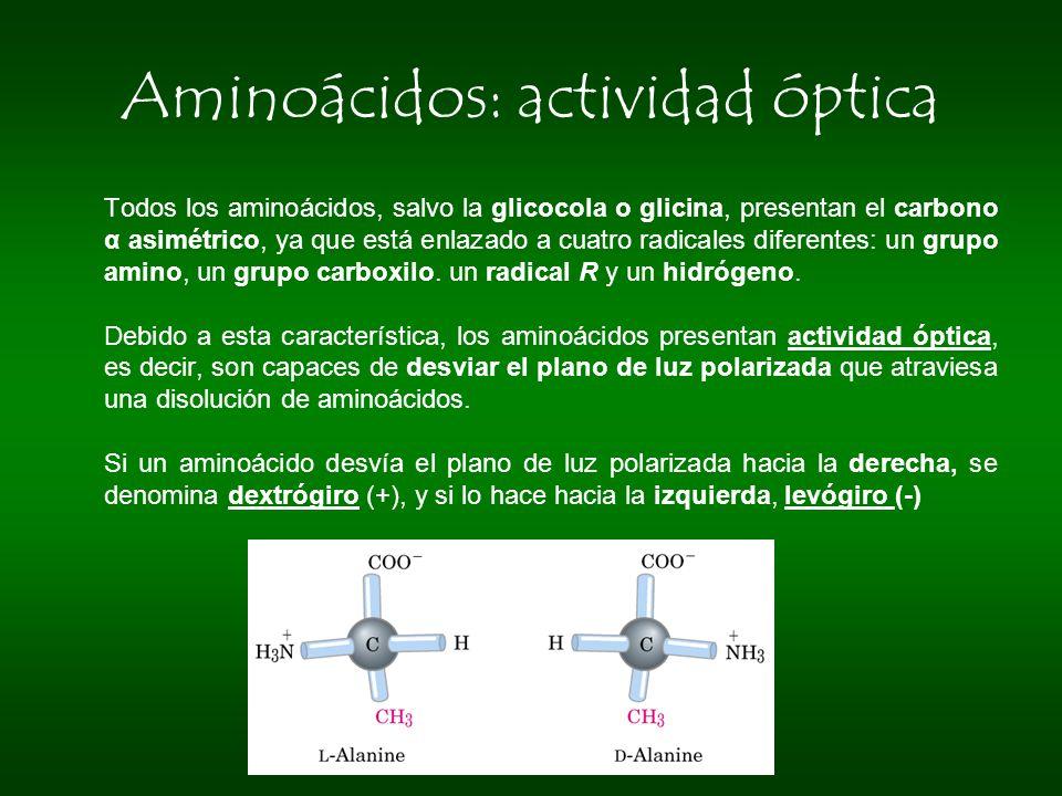 Aminoácidos: actividad óptica