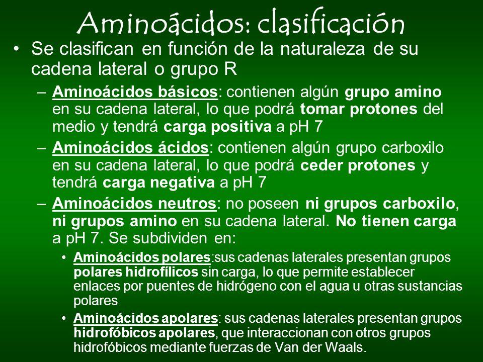 Aminoácidos: clasificación