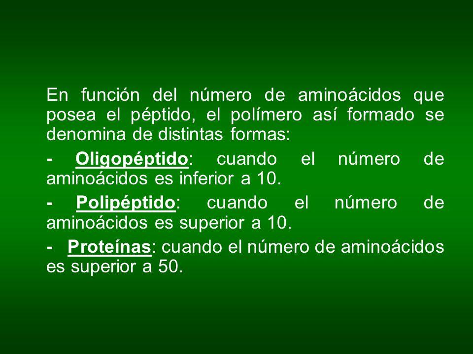En función del número de aminoácidos que posea el péptido, el polímero así formado se denomina de distintas formas: