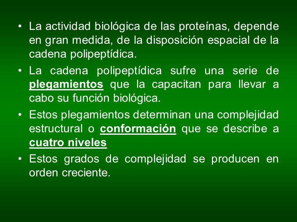 La actividad biológica de las proteínas, depende en gran medida, de la disposición espacial de la cadena polipeptídica.