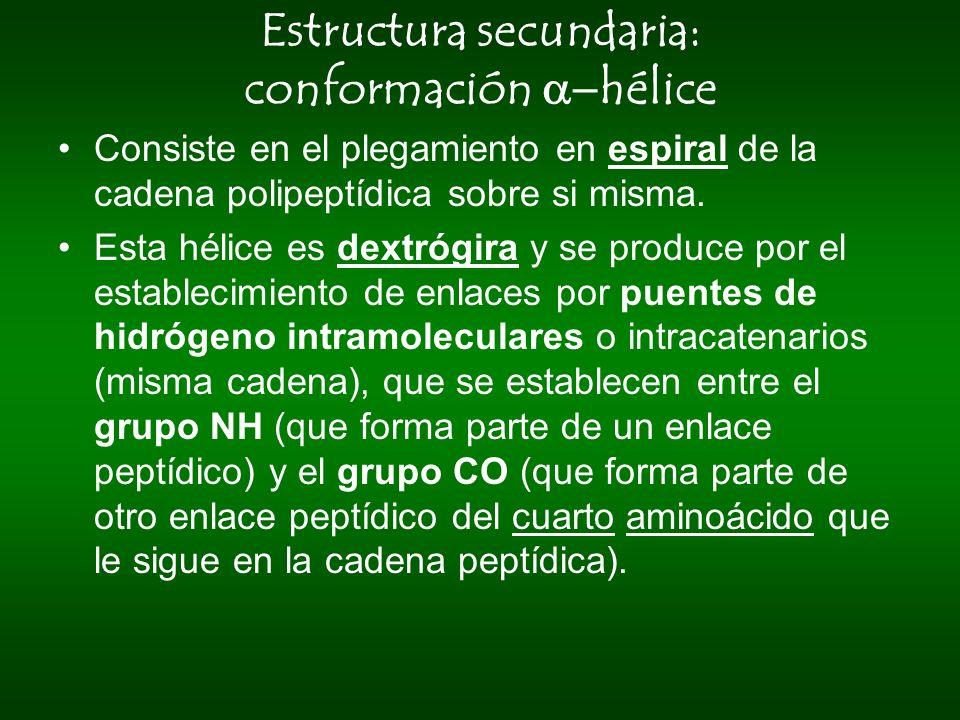 Estructura secundaria: conformación a-hélice