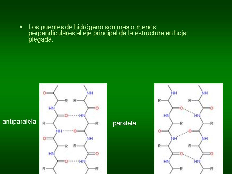 Los puentes de hidrógeno son mas o menos perpendiculares al eje principal de la estructura en hoja plegada.