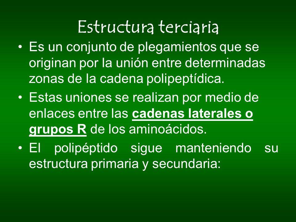 Estructura terciaria Es un conjunto de plegamientos que se originan por la unión entre determinadas zonas de la cadena polipeptídica.