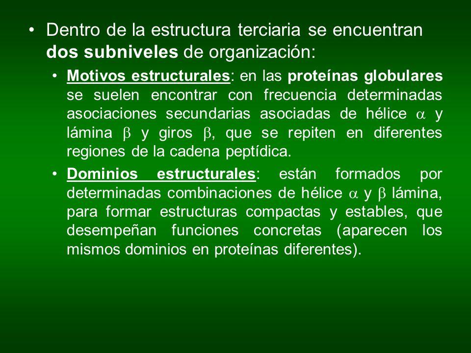 Dentro de la estructura terciaria se encuentran dos subniveles de organización: