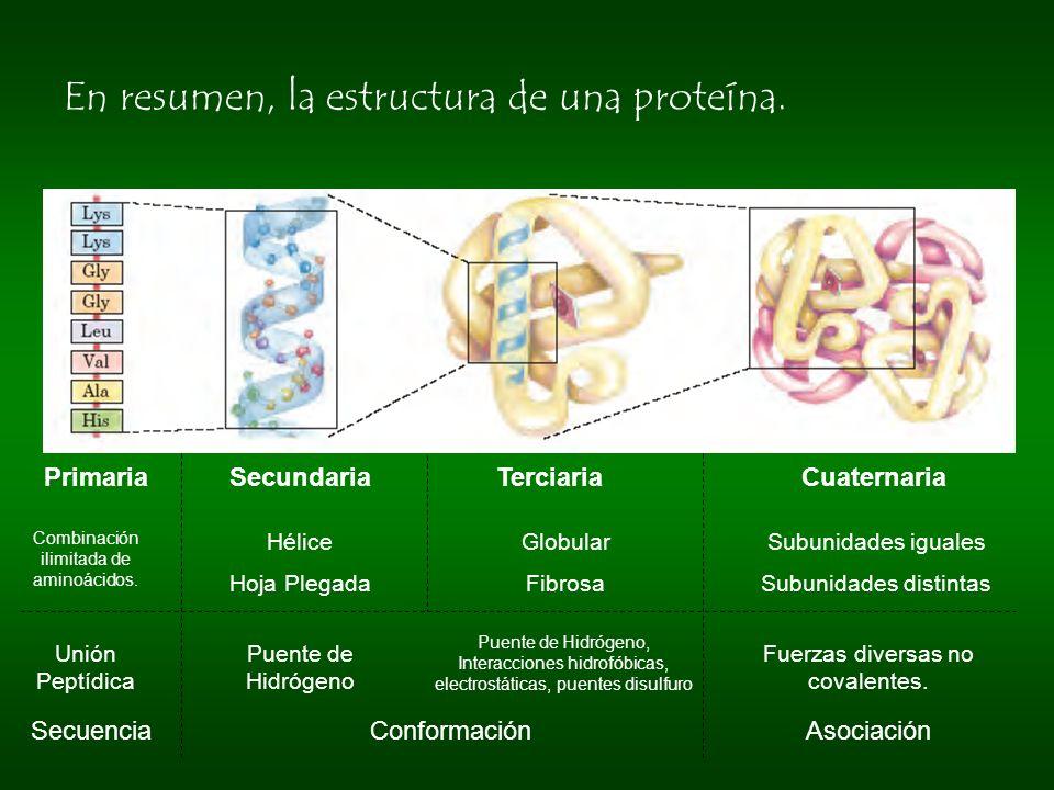 En resumen, la estructura de una proteína.