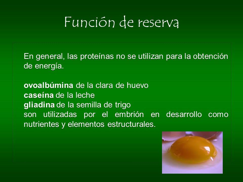 Función de reserva ovoalbúmina de la clara de huevo