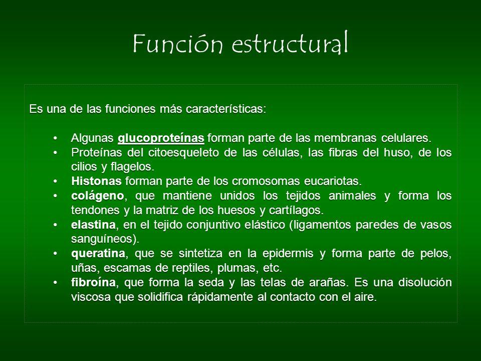 Función estructural Es una de las funciones más características:
