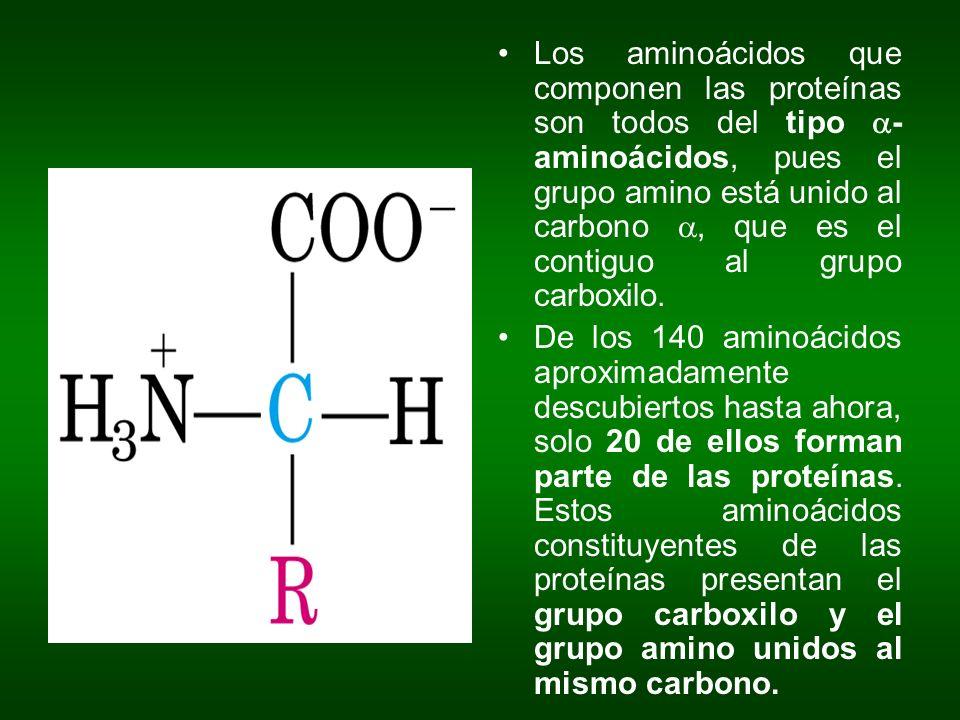 Los aminoácidos que componen las proteínas son todos del tipo a-aminoácidos, pues el grupo amino está unido al carbono a, que es el contiguo al grupo carboxilo.