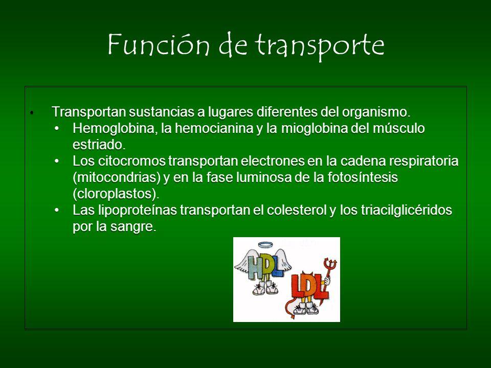 Función de transporte Transportan sustancias a lugares diferentes del organismo. Hemoglobina, la hemocianina y la mioglobina del músculo estriado.