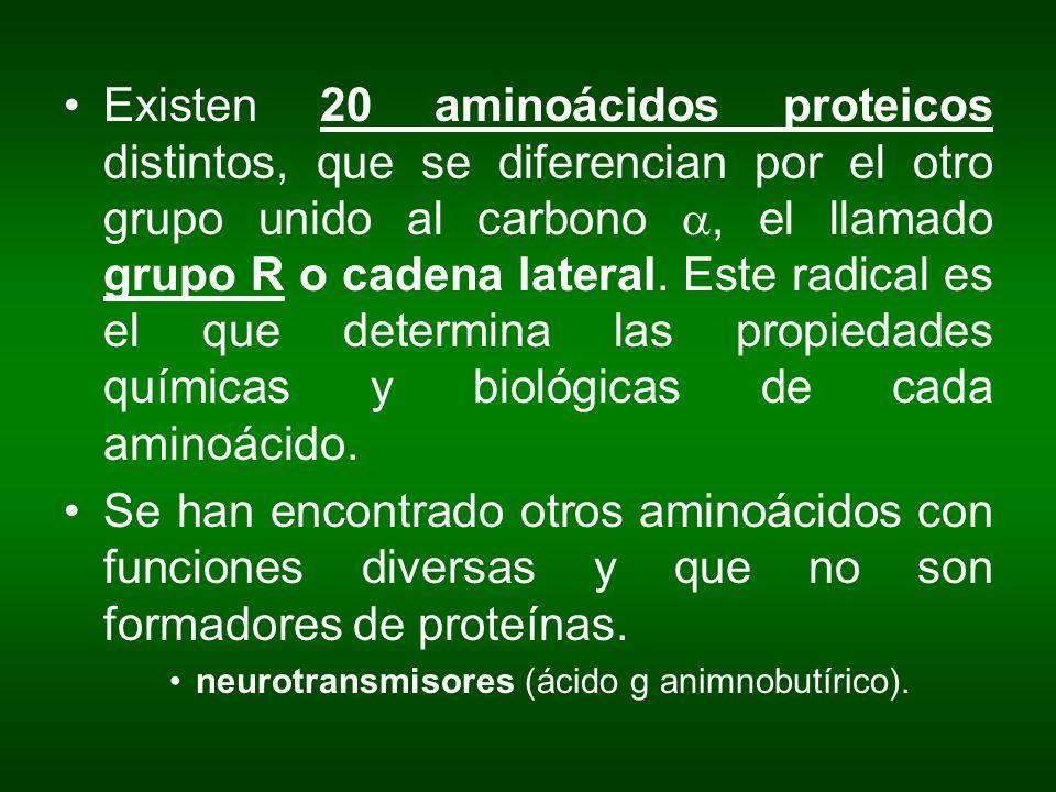 Existen 20 aminoácidos proteicos distintos, que se diferencian por el otro grupo unido al carbono a, el llamado grupo R o cadena lateral. Este radical es el que determina las propiedades químicas y biológicas de cada aminoácido.
