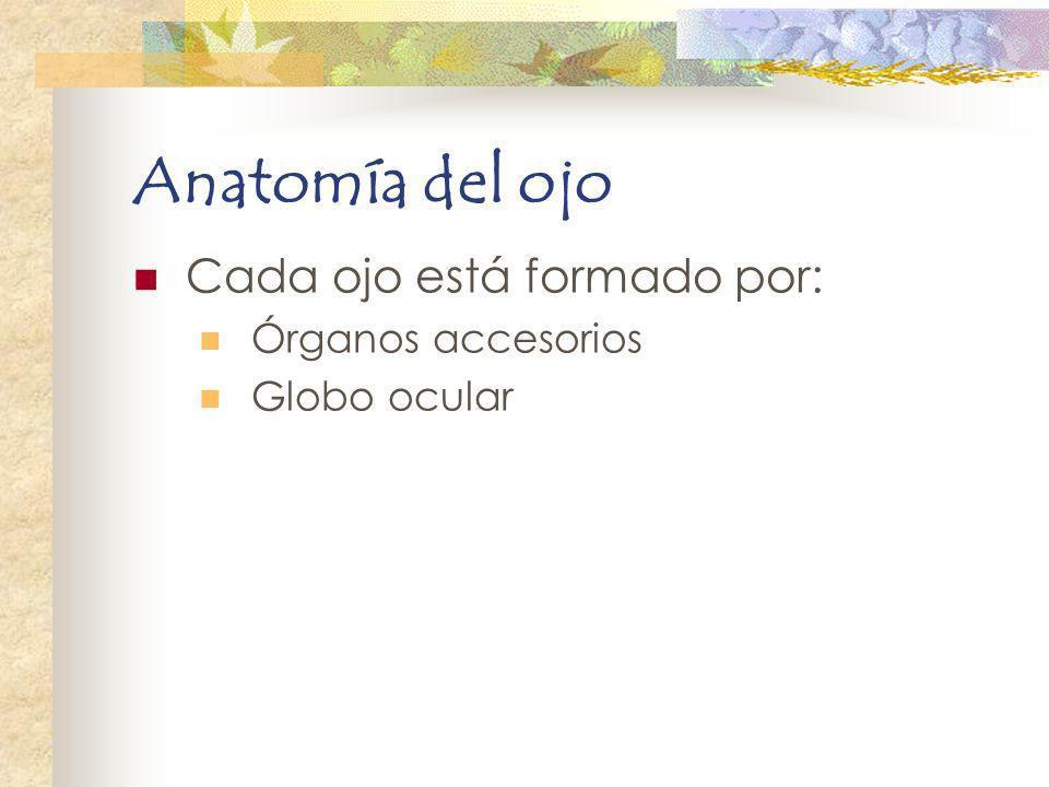 Anatomía del ojo Cada ojo está formado por: Órganos accesorios