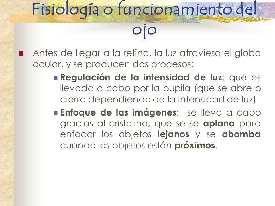 Fisiología o funcionamiento del ojo