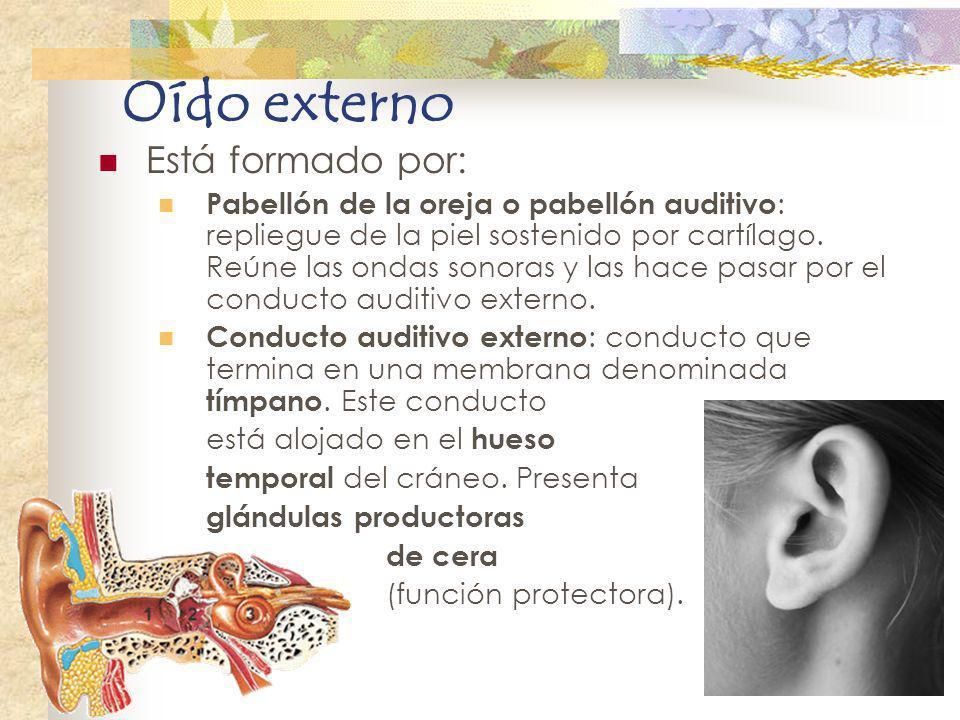 Oído externo Está formado por: