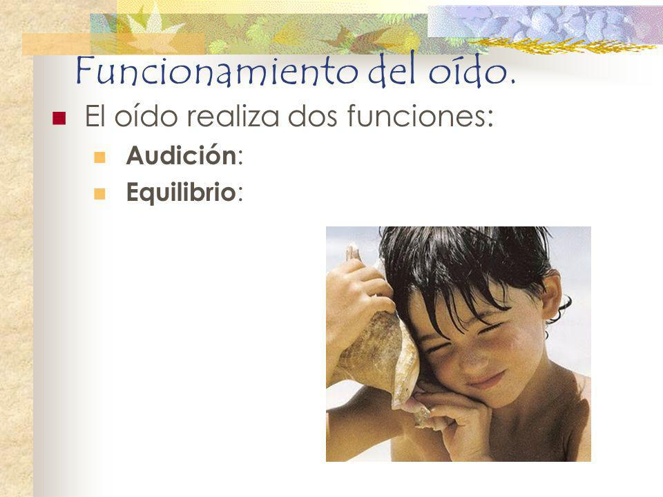 Funcionamiento del oído.