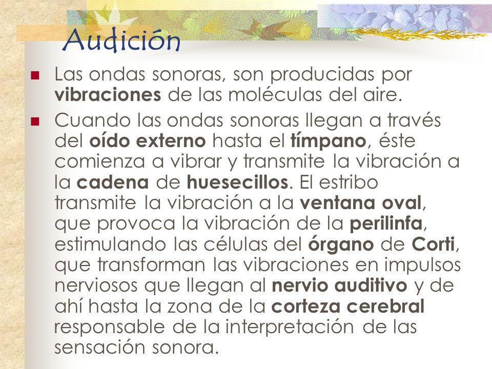 Audición Las ondas sonoras, son producidas por vibraciones de las moléculas del aire.