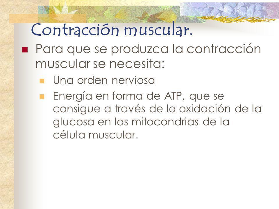 Contracción muscular. Para que se produzca la contracción muscular se necesita: Una orden nerviosa.