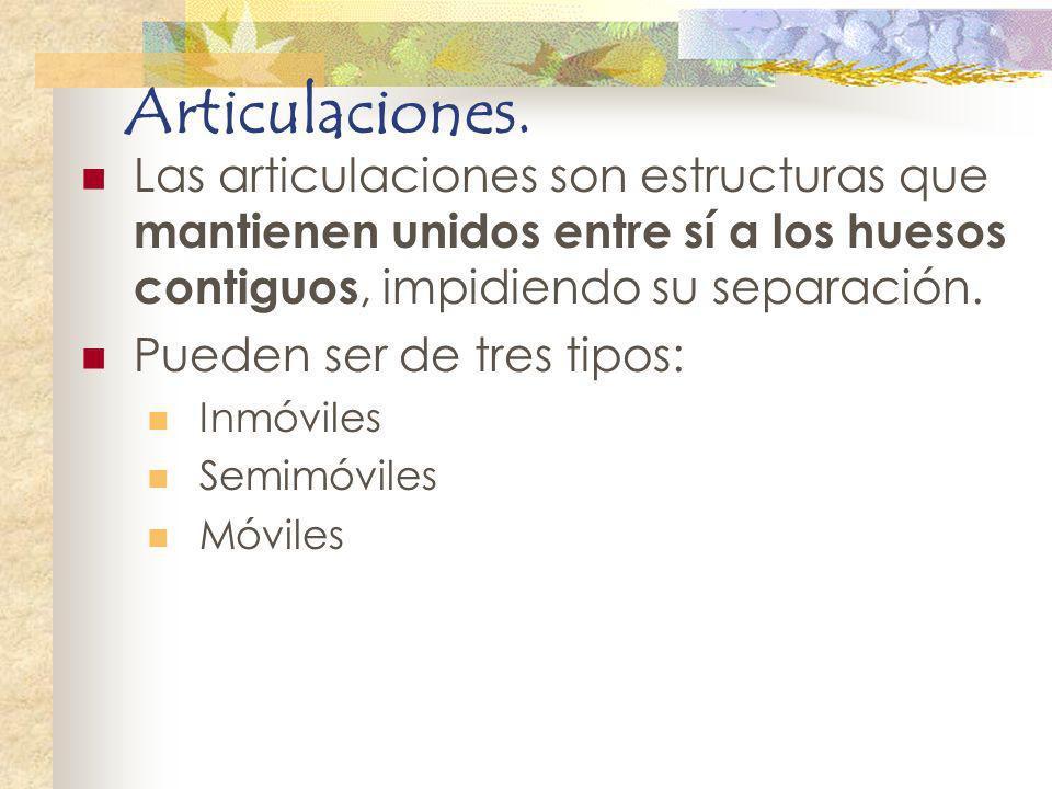 Articulaciones. Las articulaciones son estructuras que mantienen unidos entre sí a los huesos contiguos, impidiendo su separación.