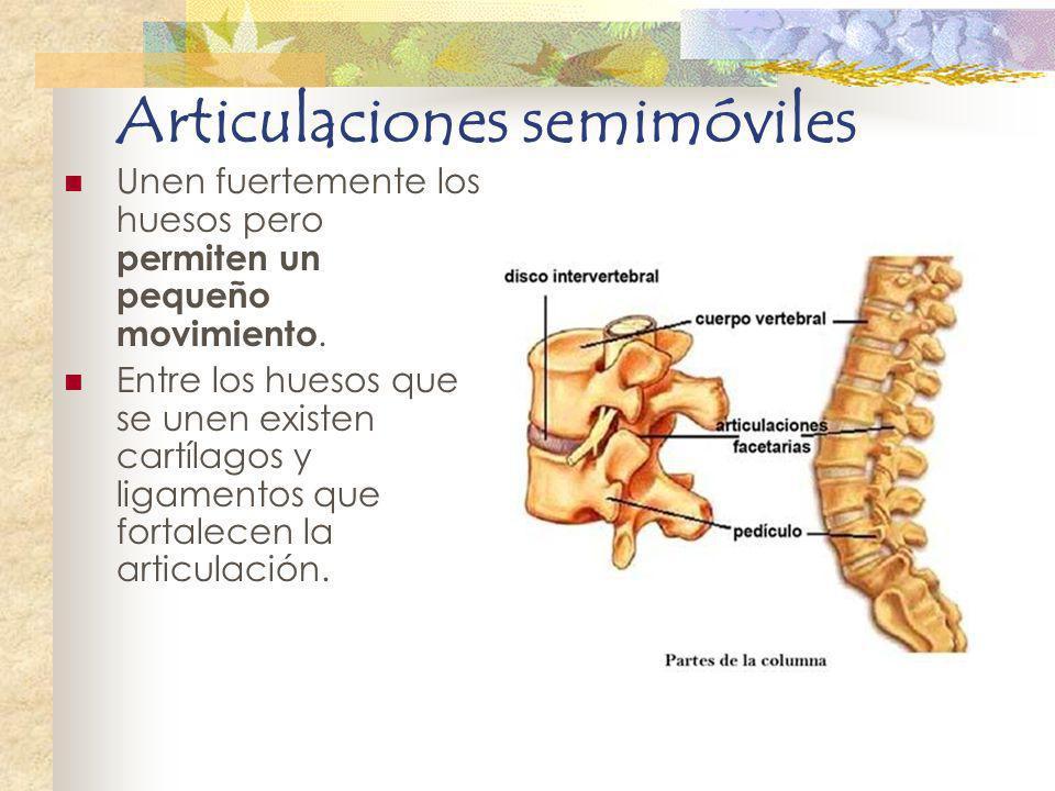 Articulaciones semimóviles