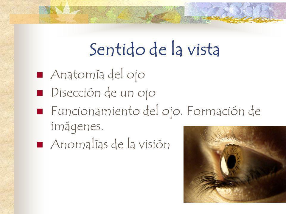 Sentido de la vista Anatomía del ojo Disección de un ojo