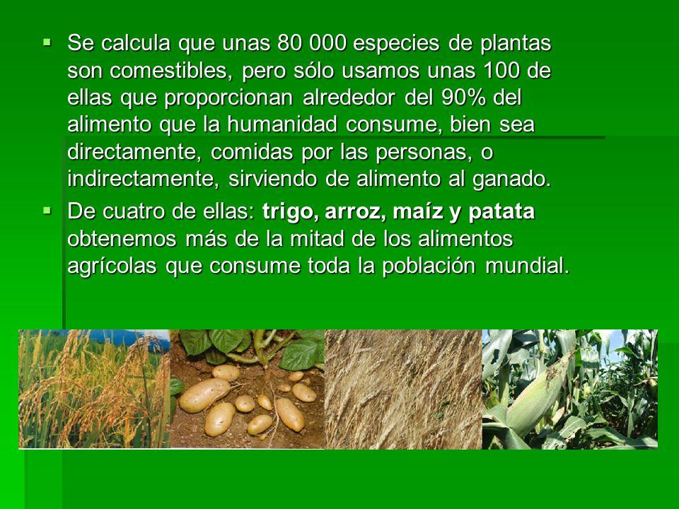 Se calcula que unas 80 000 especies de plantas son comestibles, pero sólo usamos unas 100 de ellas que proporcionan alrededor del 90% del alimento que la humanidad consume, bien sea directamente, comidas por las personas, o indirectamente, sirviendo de alimento al ganado.