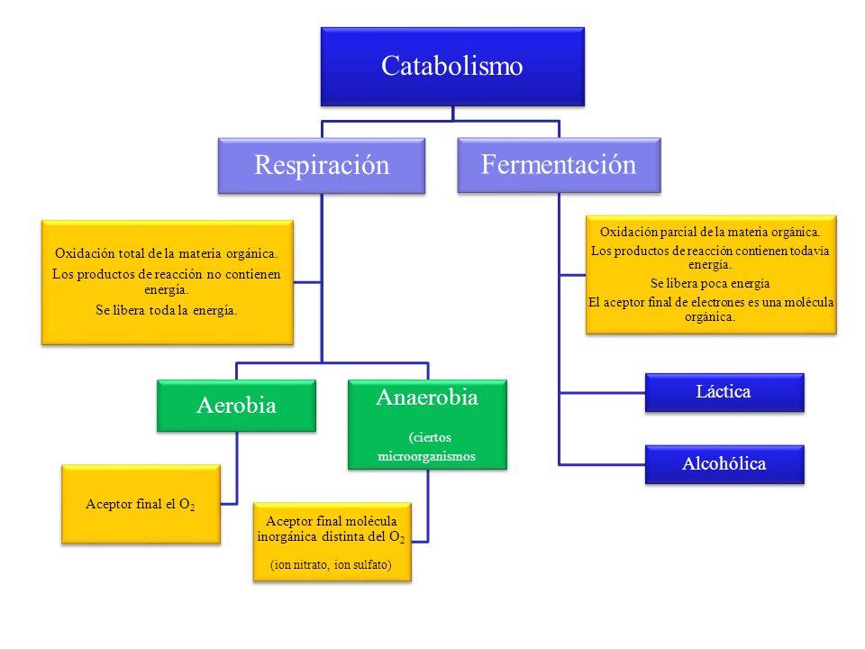 Catabolismo Respiración Fermentación Anaerobia Aerobia (ciertos