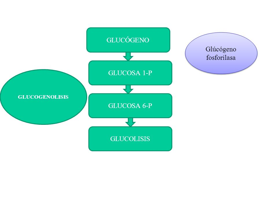 Glúcógeno fosforilasa