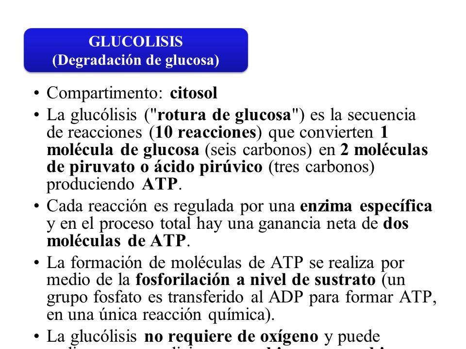 (Degradación de glucosa)
