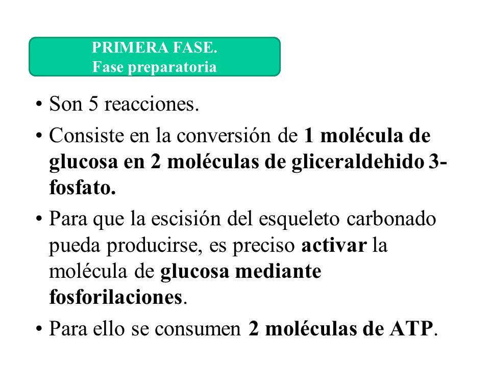 Para ello se consumen 2 moléculas de ATP.