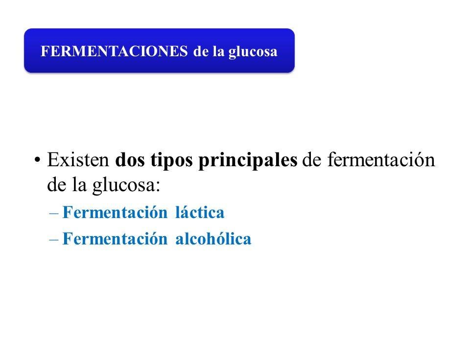 FERMENTACIONES de la glucosa