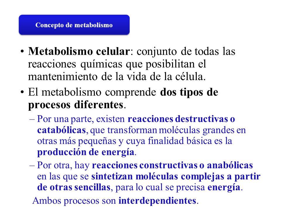 Concepto de metabolismo