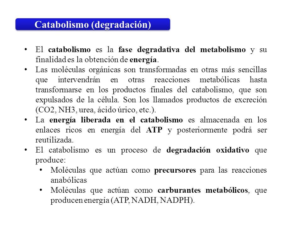 Catabolismo (degradación)