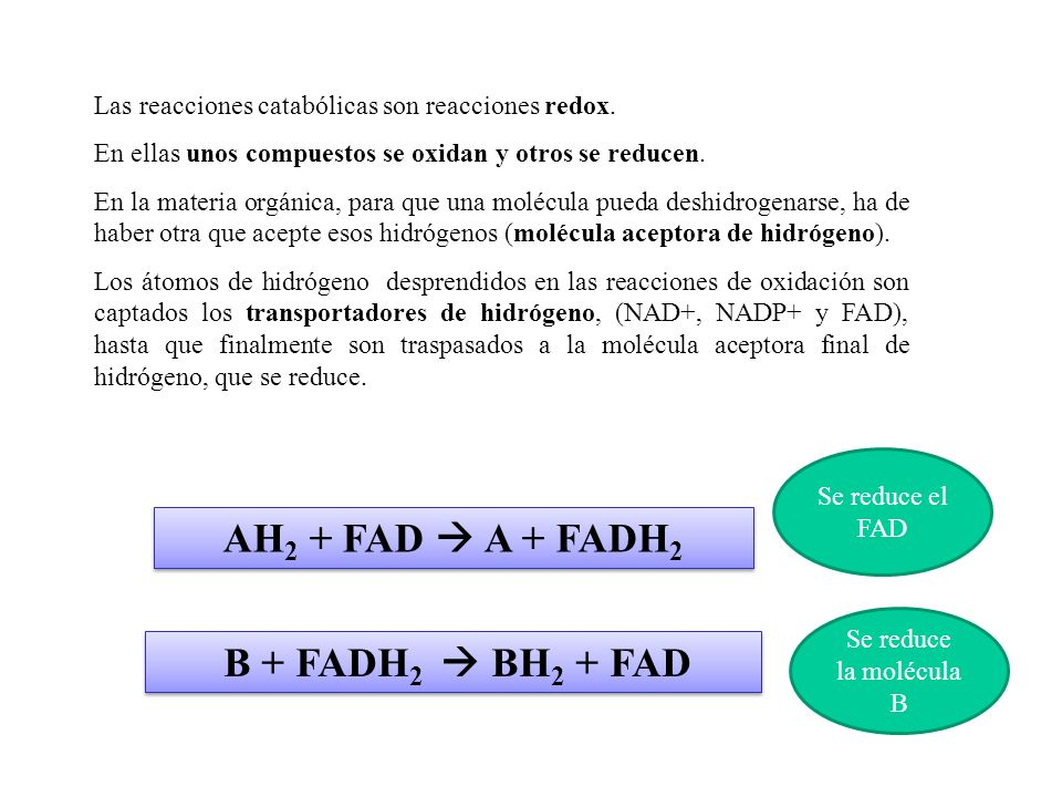 AH2 + FAD  A + FADH2 B + FADH2  BH2 + FAD