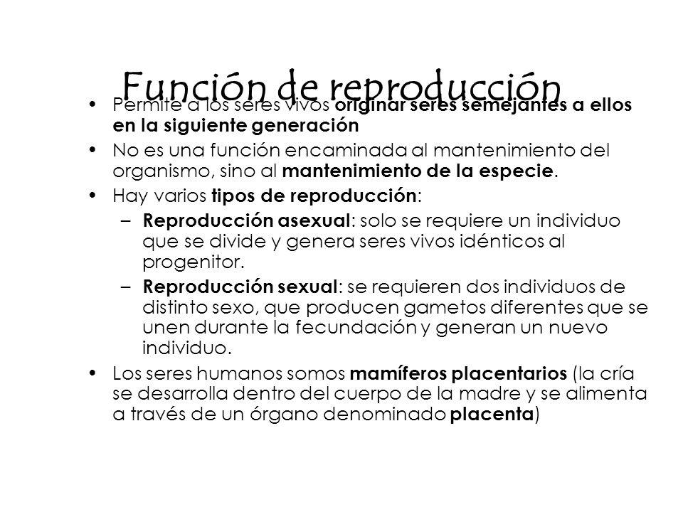 Función de reproducción