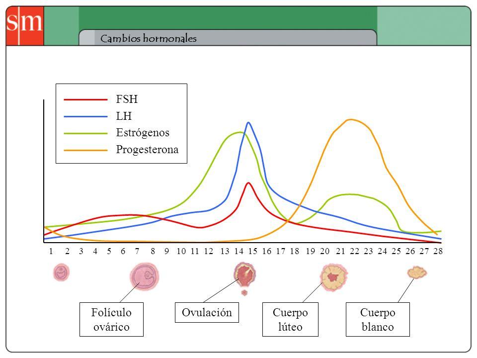 FSH LH Estrógenos Progesterona Folículo ovárico Ovulación Cuerpo lúteo