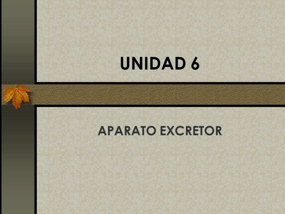 UNIDAD 6 APARATO EXCRETOR