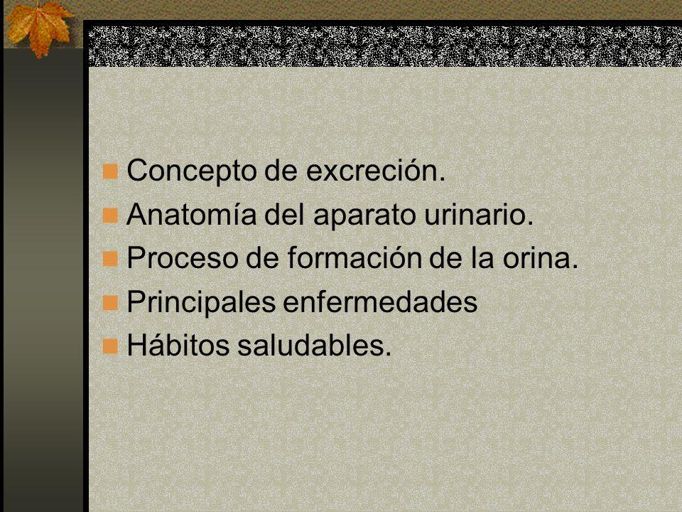 Concepto de excreción. Anatomía del aparato urinario. Proceso de formación de la orina. Principales enfermedades.