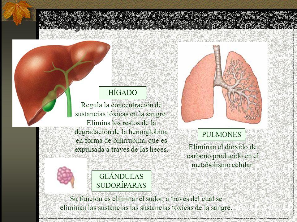 Órganos con función excretora