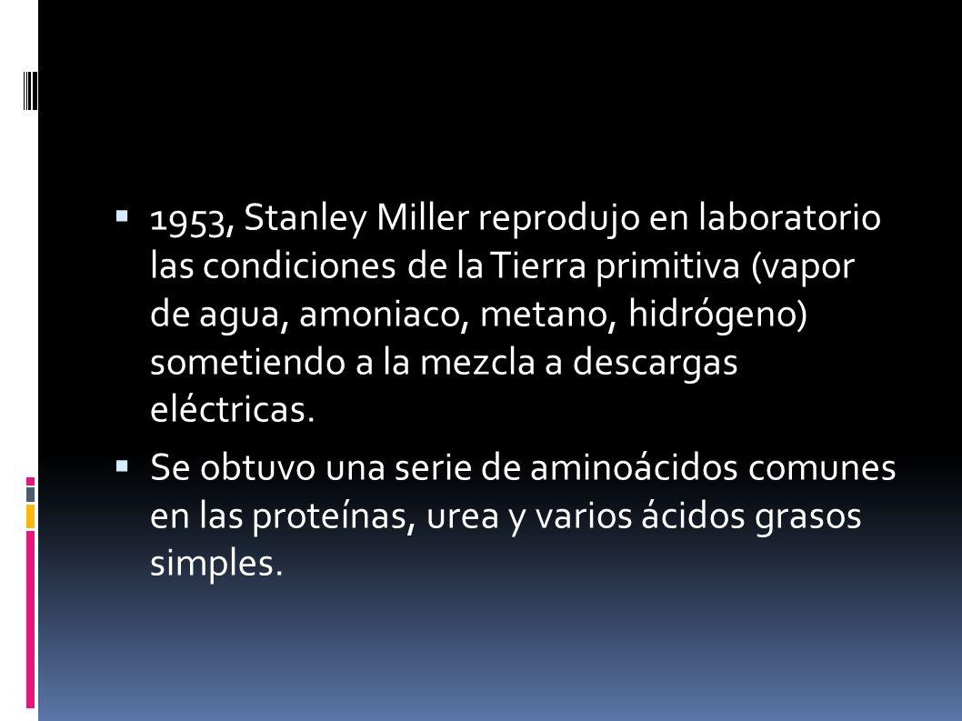 1953, Stanley Miller reprodujo en laboratorio las condiciones de la Tierra primitiva (vapor de agua, amoniaco, metano, hidrógeno) sometiendo a la mezcla a descargas eléctricas.