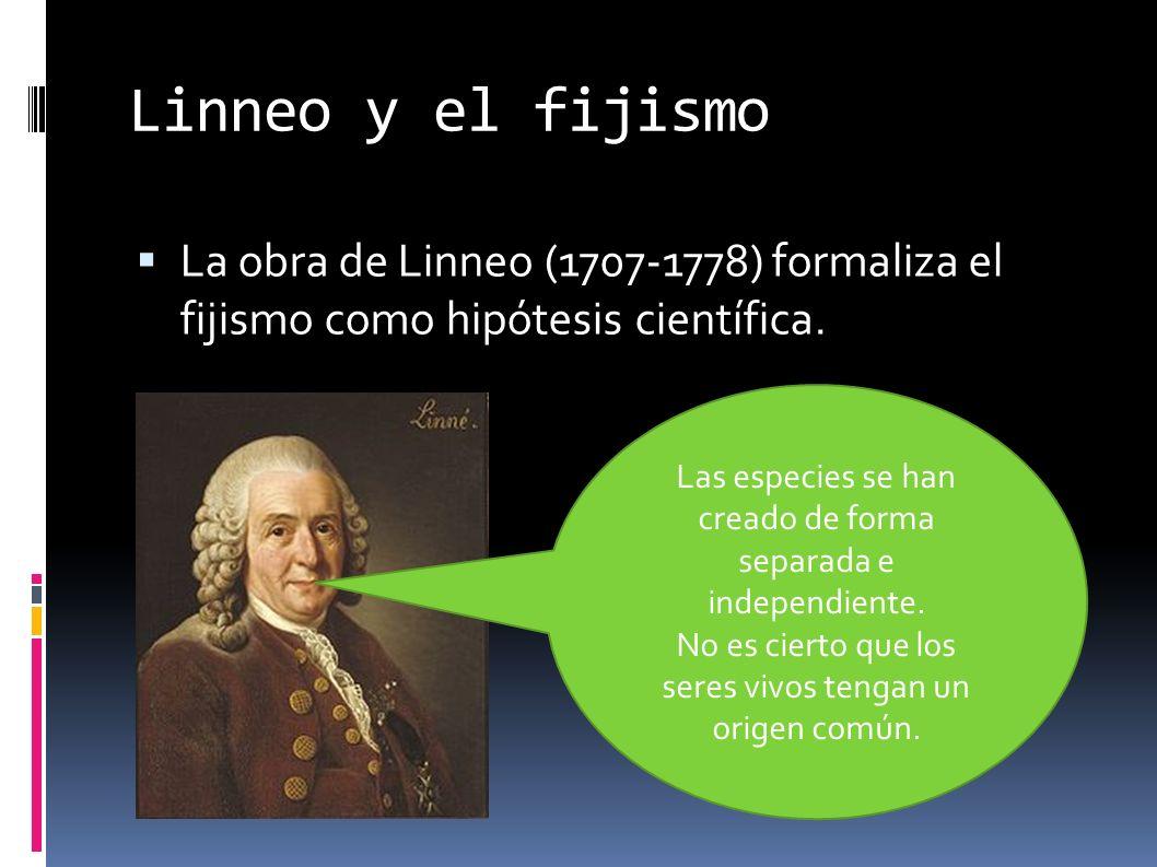 Linneo y el fijismo La obra de Linneo (1707-1778) formaliza el fijismo como hipótesis científica.