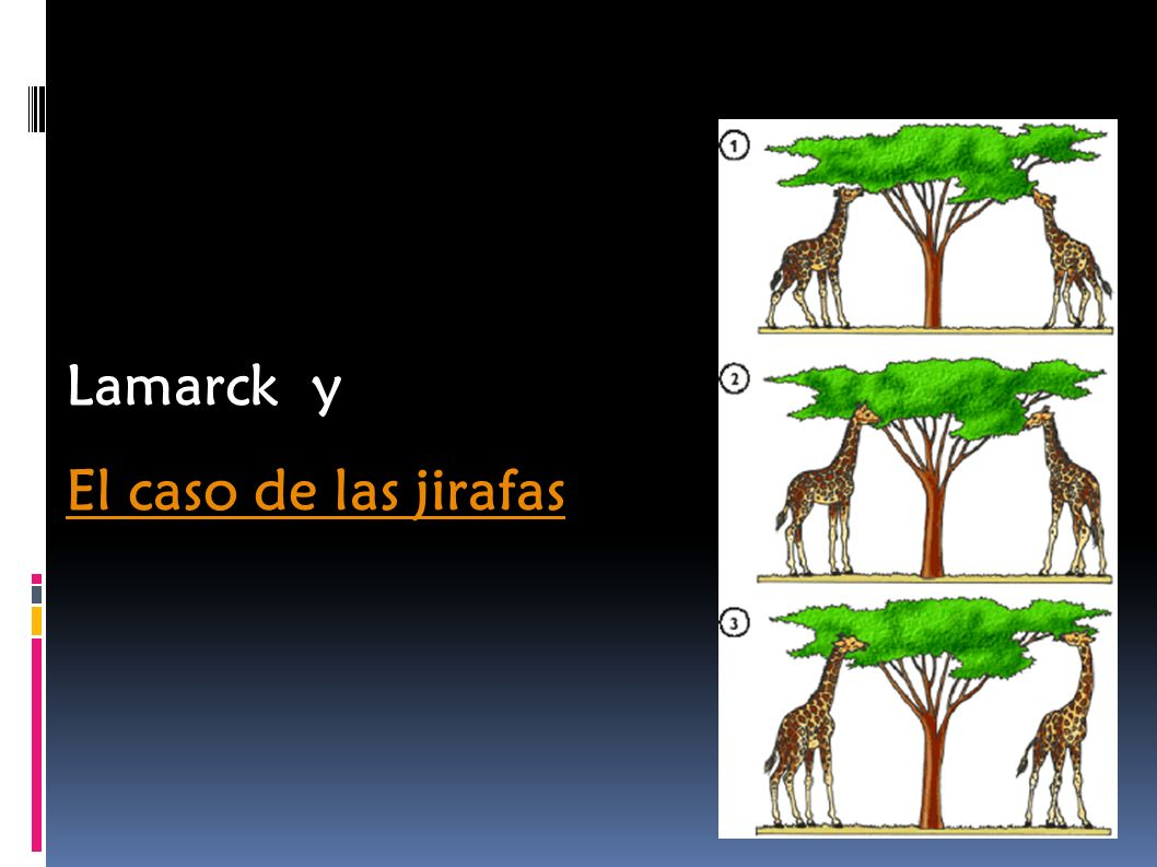 Lamarck y El caso de las jirafas