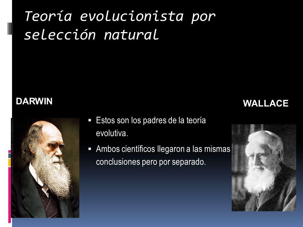 Teoría evolucionista por selección natural