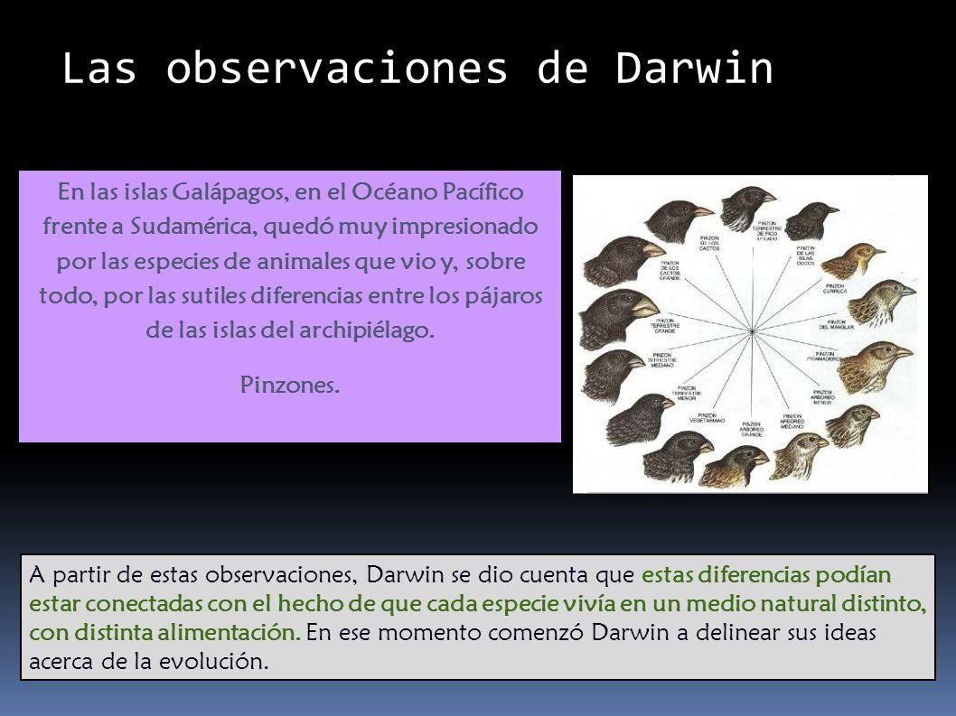 Las observaciones de Darwin