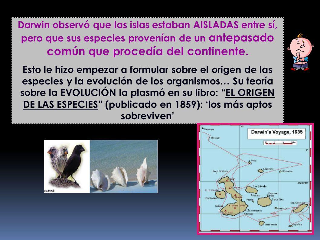 Darwin observó que las islas estaban AISLADAS entre sí, pero que sus especies provenían de un antepasado común que procedía del continente.