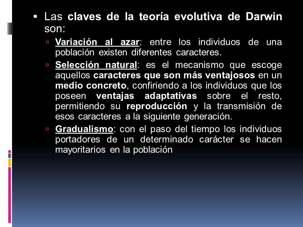Las claves de la teoría evolutiva de Darwin son: