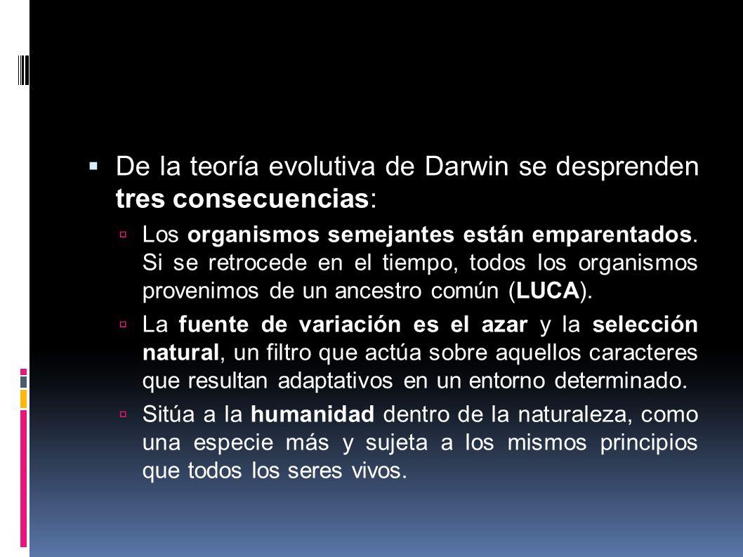 De la teoría evolutiva de Darwin se desprenden tres consecuencias: