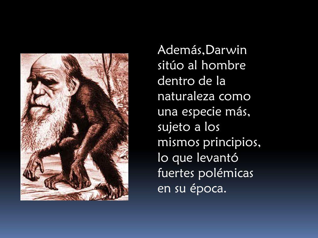 Además,Darwin sitúo al hombre dentro de la naturaleza como una especie más, sujeto a los mismos principios, lo que levantó fuertes polémicas en su época.