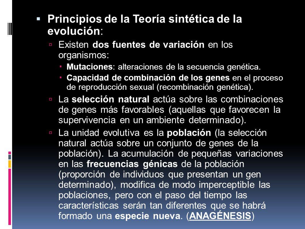 Principios de la Teoría sintética de la evolución:
