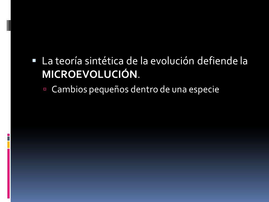 La teoría sintética de la evolución defiende la MICROEVOLUCIÓN.