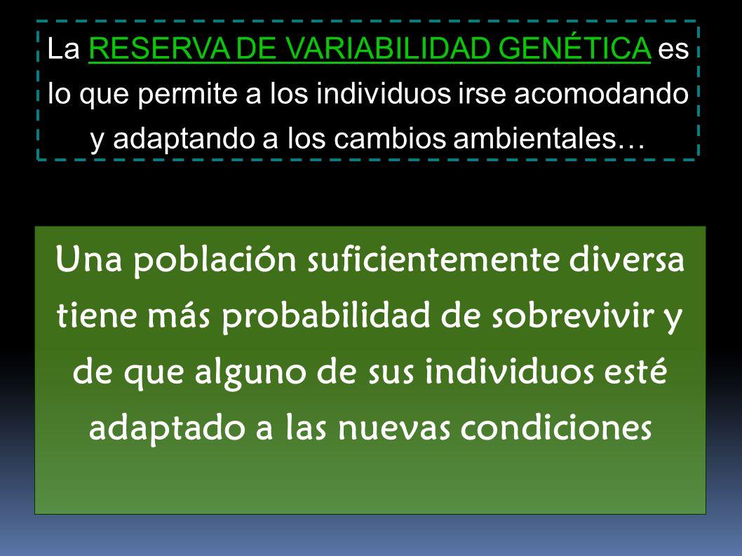 La RESERVA DE VARIABILIDAD GENÉTICA es lo que permite a los individuos irse acomodando y adaptando a los cambios ambientales…