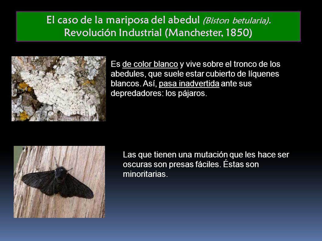 El caso de la mariposa del abedul (Biston betularia)